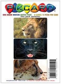 PikCard 3-Pack: Big Cats (12 Guitar Picks)
