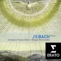 JS Bach: Masses & Sanctus