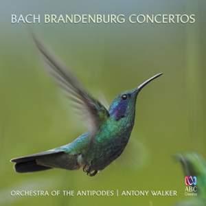 JS Bach: Brandenburg Concertos & Sinfonias from the Cantatas